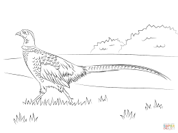 golden pheasant walking coloring page free printable coloring pages