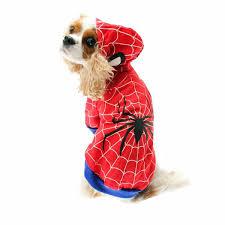 Spider Dog Halloween Costume 25 Spider Dog Ideas Dog Spider Costume