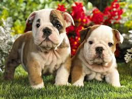 deworming dogs and puppies