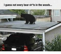 Funny Bear Meme - i guess not every bear sh ts in the woods funny meme on esmemes com