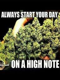 Best Weed Memes - 69 best weed memes images on pinterest memes de marihuana