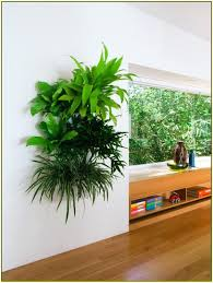 Wall Decorations Living Room by Wall Ideas Diy Living Wall Indoor Diy Green Wall Using Tensioned