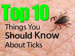 Ticks In Backyard Best 25 Deer Ticks Ideas On Pinterest Deer Tick Bite Lyme Tick