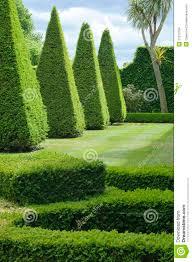 English Boxwood Garden Design Stock Images Image 21573704