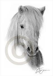 shetland pony pencil drawing print a4 size artwork signed