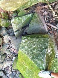 jpvstonestrider stonestrider