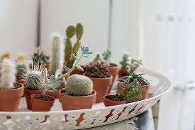 apartment plants 6 tips for picking the best indoor plants for condo and apartment