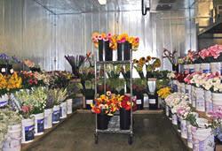 Austin Tx Flower Shops - austin flower shops flower inspiration