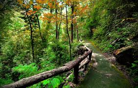 forest foliage walk trees walkway path road beautiful green hd for
