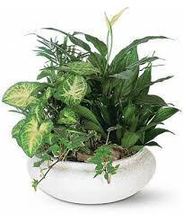 plant delivery flowerwyz plant delivery indoor plants potted plants indoor