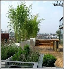 pflanzen f r balkon balkon sichtschutz mit pflanzen balkon sichtschutz mit pflanzen