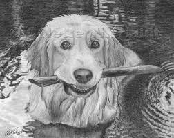 golden retriever dog pencil drawing portrait pet portraits drawing