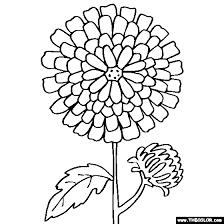 chrysanthemum flower coloring