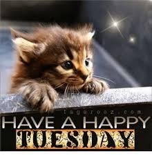Tuesday Funny Memes - t a g a r o o z c o m have a happy tuesday meme on me me