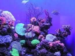 Zombie Aquarium Decorations Huge Aquariums Amazing Pictures On Weirdomatic Weirdomatic
