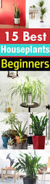 591 best plants indoor and out images on pinterest gardening