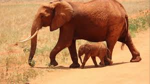 20 high resolution elephant pictures no 6 u2013 newborn baby elephant