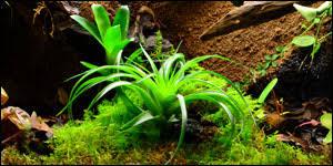 neherp terrarium suitable moss