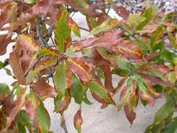is your tree sick shreveport la waskom tx all about trees