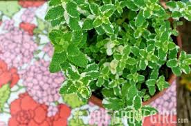 edible flowers for sale herbs and edible flowers growing guide you grow girl