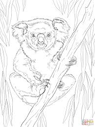 download coloring pages koala coloring pages koala coloring