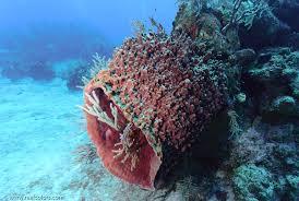 Strawberry Vase Sponge Dive Sites