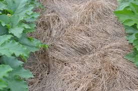 mulches for the vegetable garden state by state gardening web