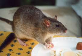Garden Rodents Types The Best Treatments For All Types Of Pests Blog