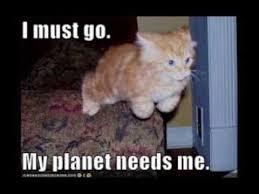 Working Cat Meme - beautiful working cat meme cats youtube 80 skiparty wallpaper