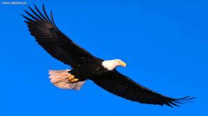 eagle sounds youtube