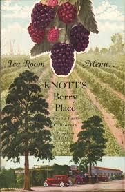 113 best knott s berry farm chicken rhubarb jam images on