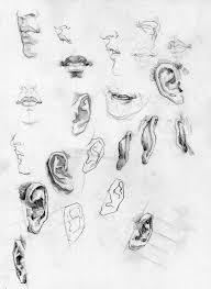 86 best character anatomy ears images on pinterest human
