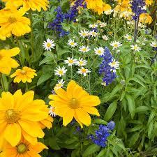 Plant Flower Garden - garden center at the home depot