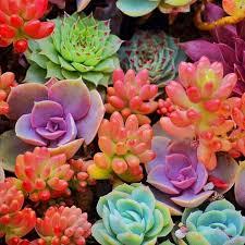 45 best awesome ideas diy indoor succulents plant garden u2013 design