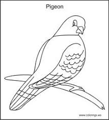 free parrot colorings pages print color free