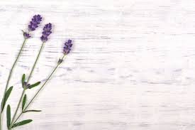 Wooden Table Top View Lavender Flowers On White Wood Table Background Top View Stock