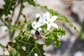 native florida air plants florida u0027s thorniest natives phillip u0027s natural world