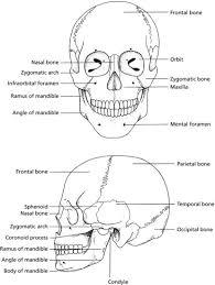 Floor Of The Cranium 7 Skull And Oral Anatomy Pocket Dentistry
