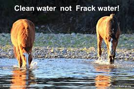 mustang org lng protect mustangs