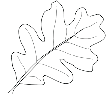 leaf coloring pages to print fall page pictures of leaves maple