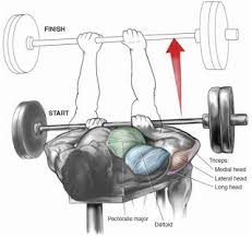 Ronnie Coleman Bench by 152 Best Bodybuilding Images On Pinterest Html Exercises And Gym