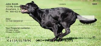 Black Lab Meme - labrador retriever personal checks labradorretrieverchecks com