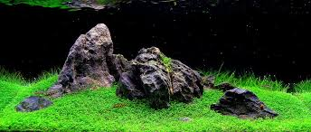 Amano Aquascaping What U0027s Your Aquascape Style Cflas