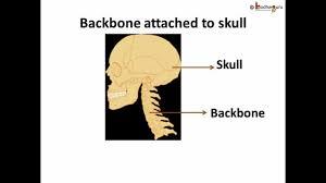 Anatomy Of Human Body Bones Science Human Body Bones And Muscles Part 1 Hindi Youtube