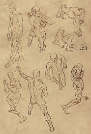 Human Anatomy Male 159 Best Male Body Poses Images On Pinterest Drawing Poses