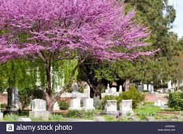 old sacramento cemetery located in sacramento california usa