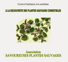cuisine plantes sauvages la cuisine algérienne a la decouverte des plantes sauvages comestibles