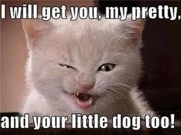 Funny Kitten Meme - caturday 2014 cute cat gifs funny kitten pics