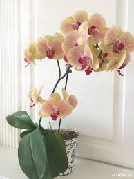 home depot black friday orchid how to grow orchids a beginner u0027s guide sand and sisal