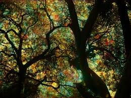 27 best trees images on pinterest amazing places to visit